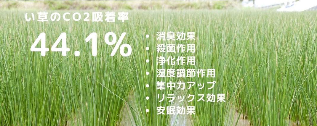 い草の効能画像