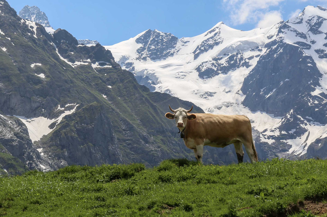 Grindelwald First Berner Oberland