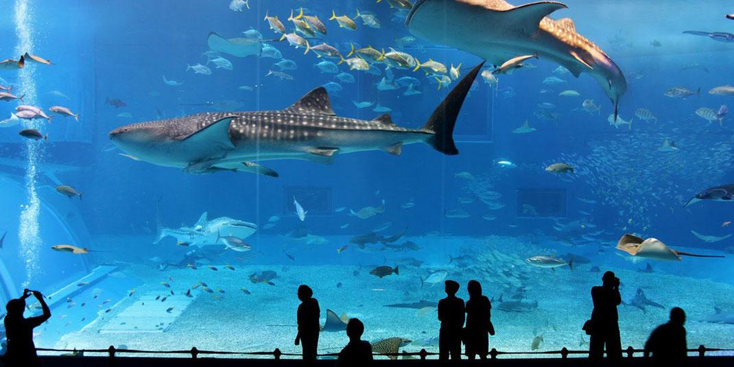 Aquarium à l'ile Maurice projet investissement
