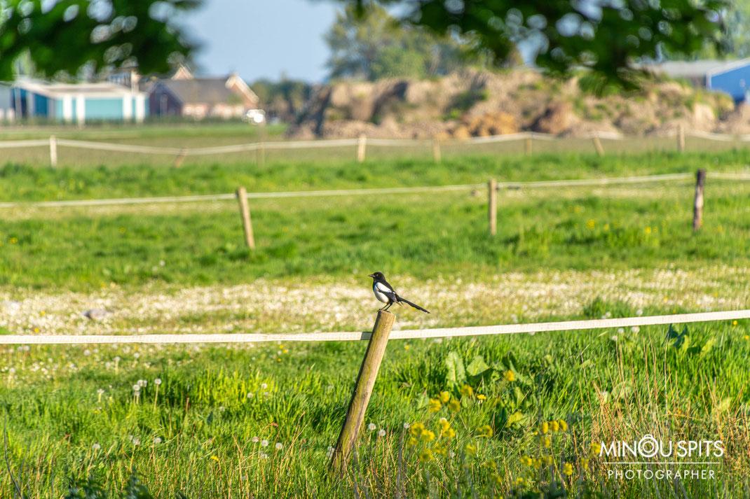 Natuurfotografie in het prachtige Hollandse landschap