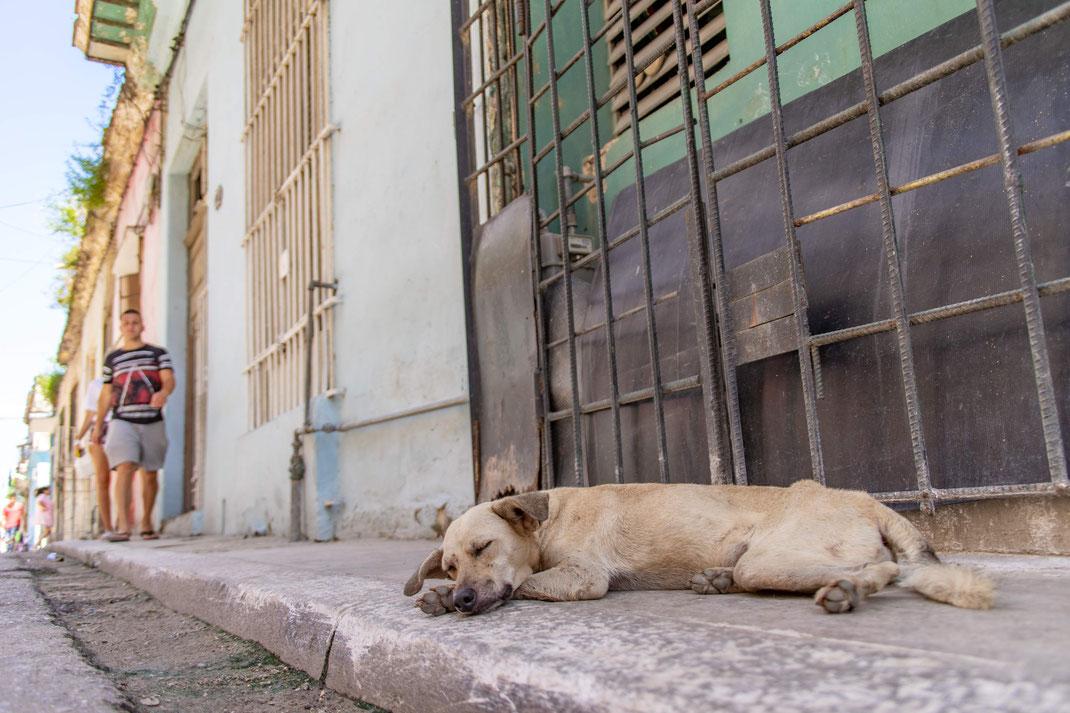 Hond op straat van Havana
