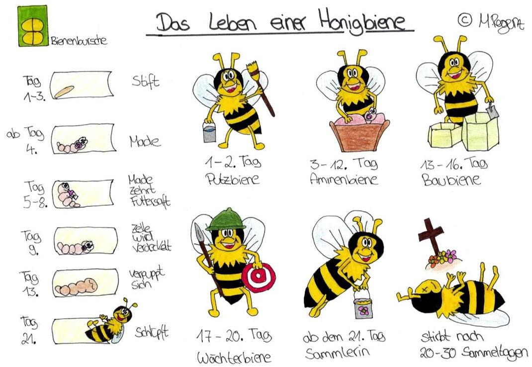 unsere Mitarbeiter/innen - Bienenbursche Hobbyimkerei mehr als Honig ...