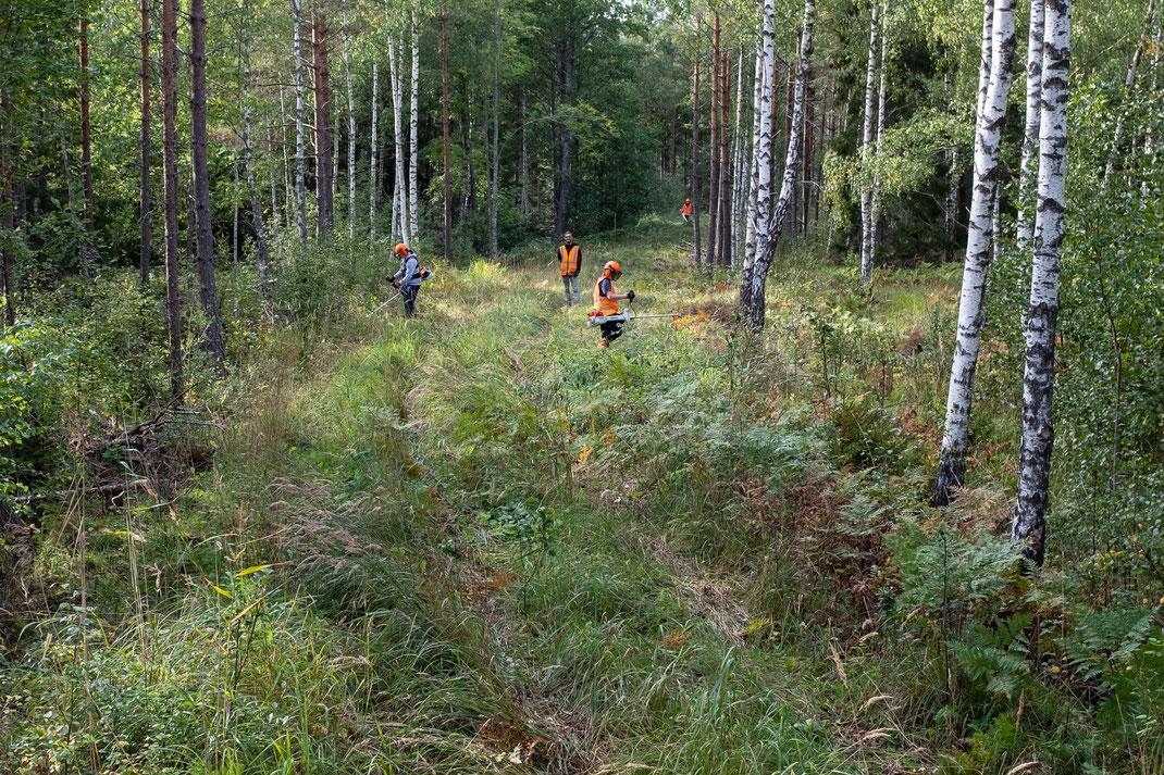 Patrick Vitt bei der Waldarbeit