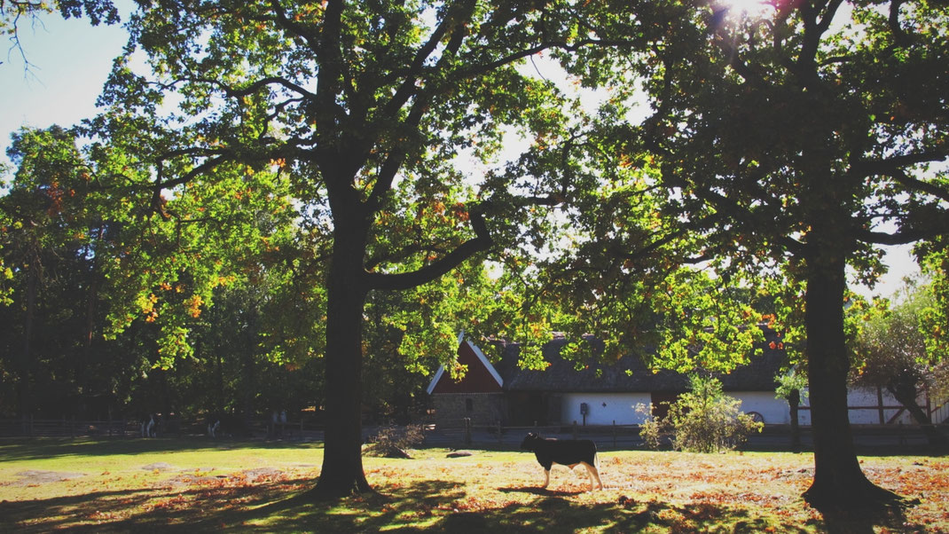 stockholm parc skansen