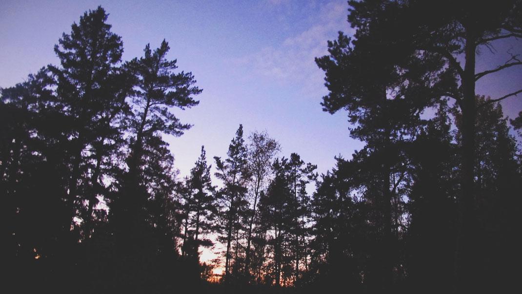 automne suède arbre forêt ciel violet rose bleu soleil bigousteppes