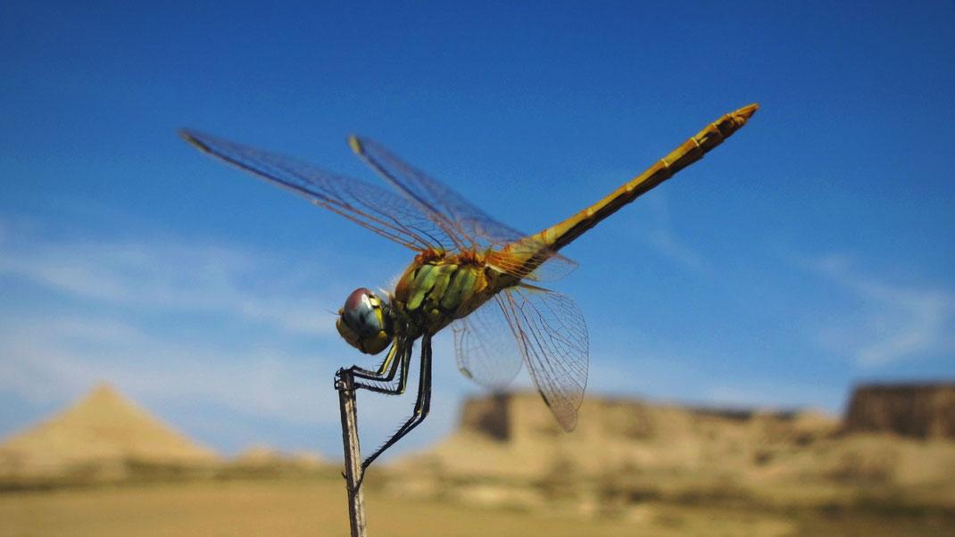 desert bardenas espagne libellule