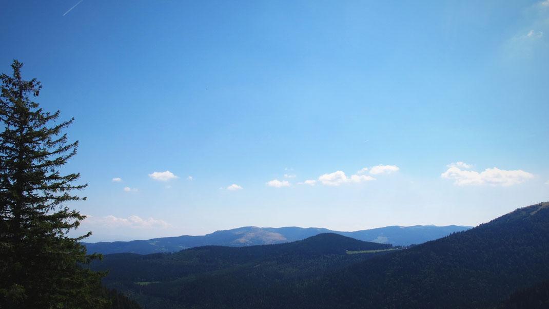 foret alsace vosges lac montagne route