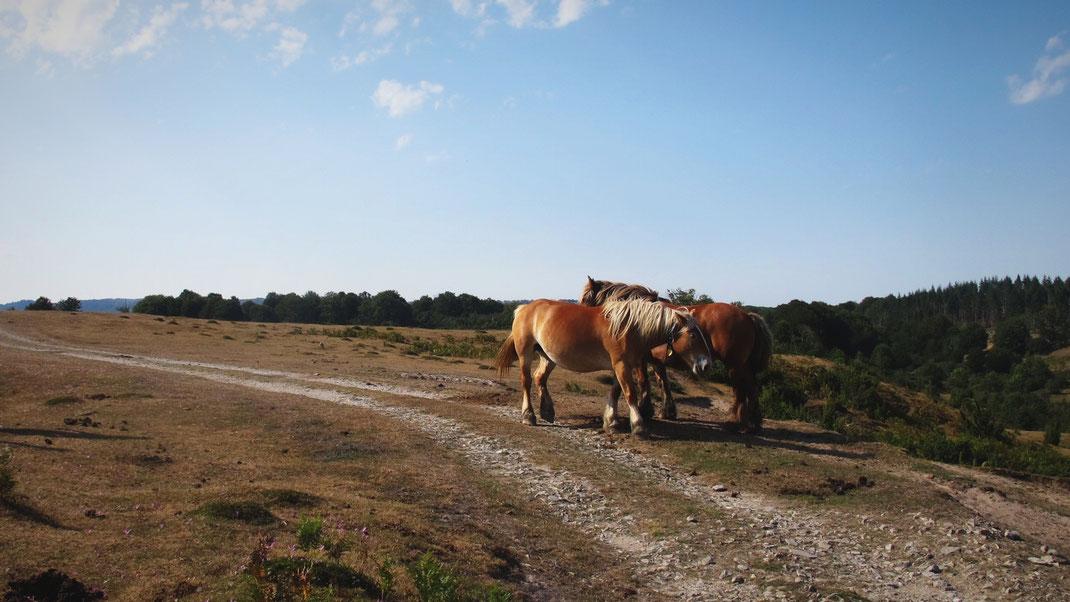 espagne chevaux chemin