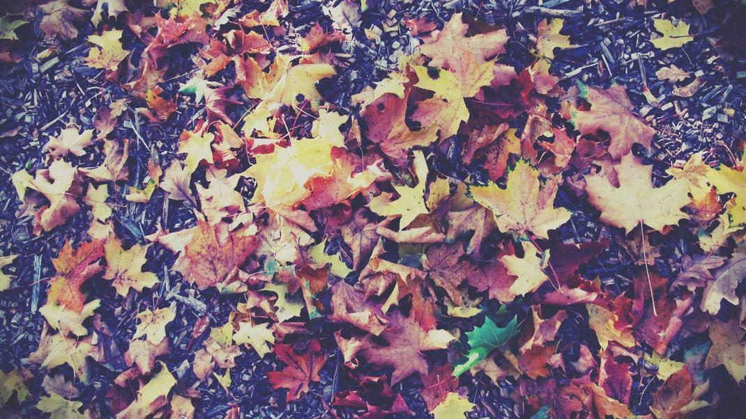 stockholm skansen parc feuilles mortes vert jaune rouge