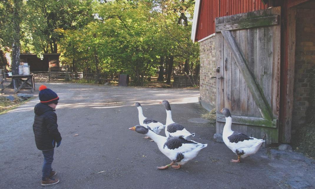 stockholm parc skansen oie ferme