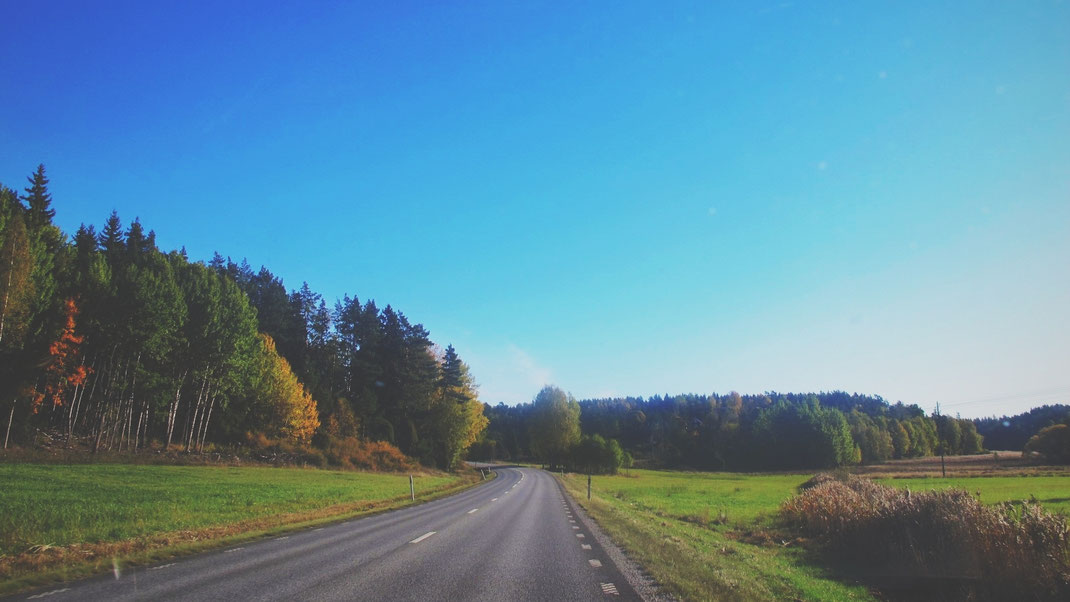 suède bigousteppes route roslagen forêt sapin