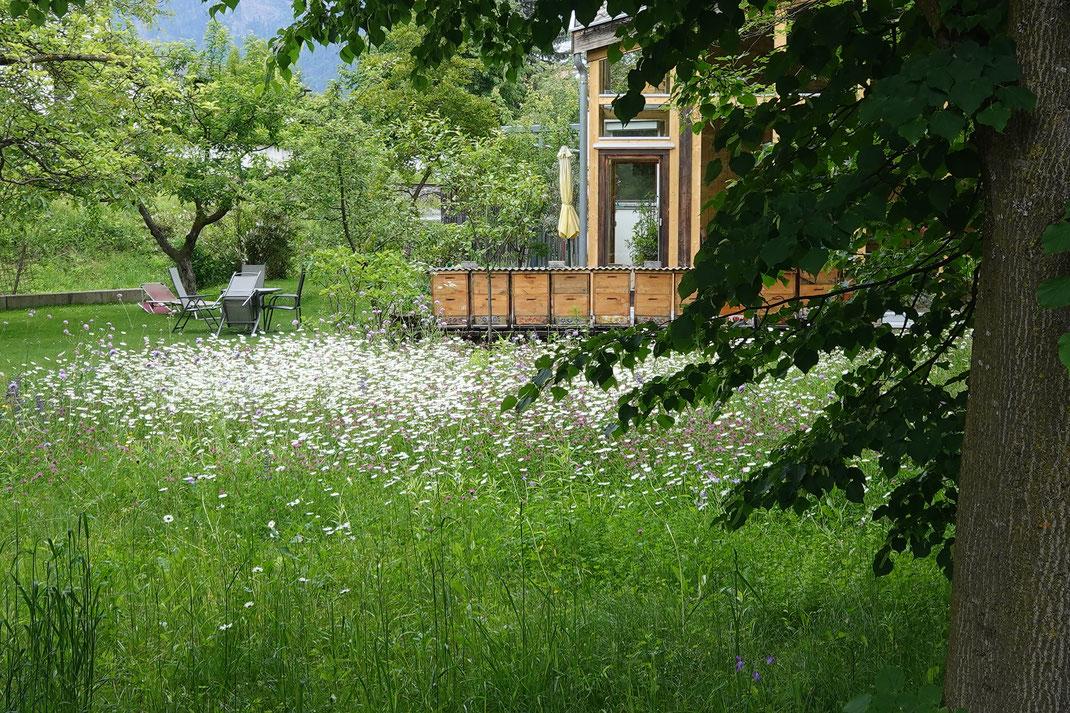Gleich zu beginn: Ein wunderschöner Bienengarten am Drau-Ufer.