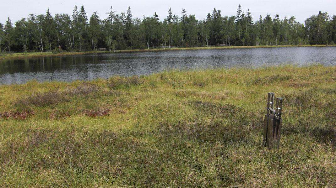 Wildseemoor Juli 2011