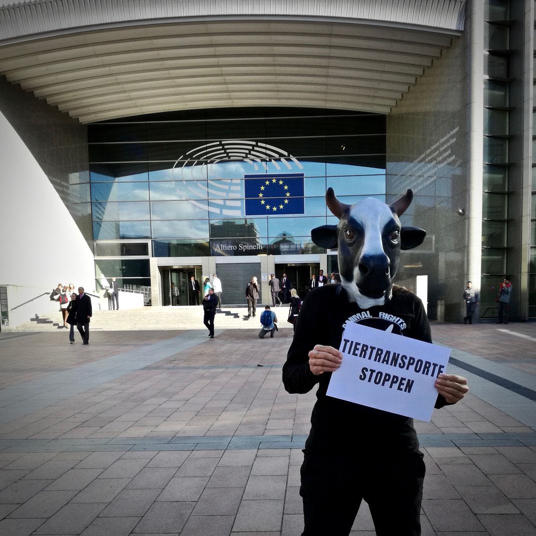 Protestaktion vor dem Europäischen Parlament |Tiertransporte Stoppen, Sandy P. Peng