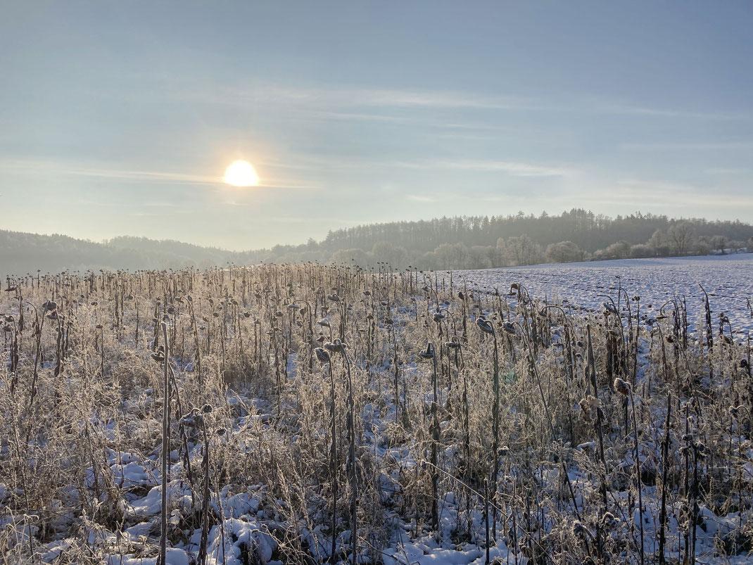 Wunderschöner Wintermorgen im Januar 2021