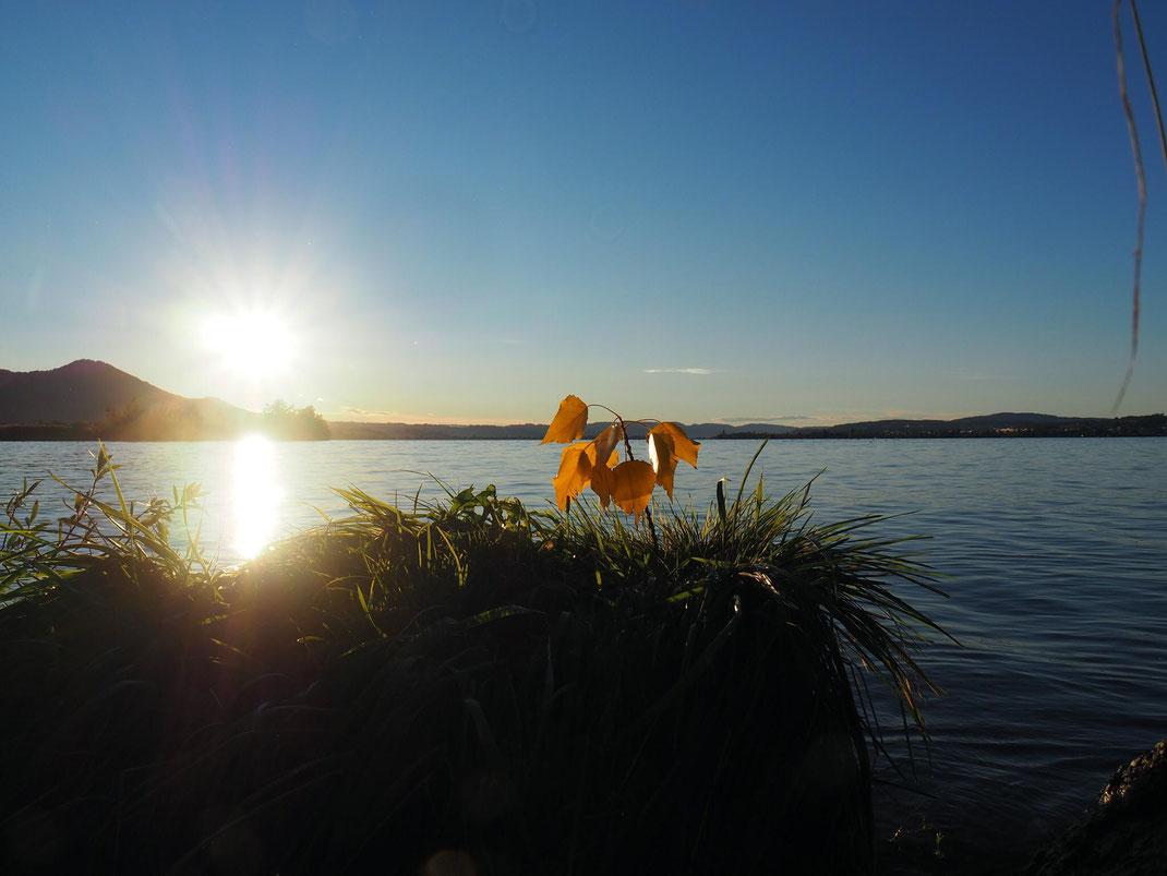 Wärme Begabung Fluss Hoffnung Zürichsee Seelen Zauber Tuggen