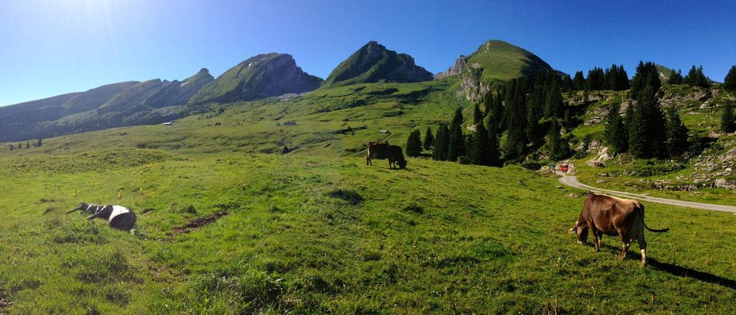 Alp Selun, Churfirsten vom Wildmannli aus gesehen- Höhle befindet sich zwischen den Bäumen