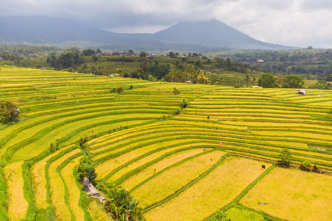 Jatiluwih rice fields at Bali