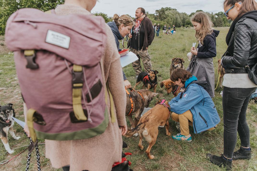 Berlin mit Hund Hauptstadt Spaziergang Erpetal Berlin Hoppegarten Gruppenbild Streunerhilfe Bulgarien e.V. Hundefotografie Berlin Tierfotograf Brandenburg authentische Reportage