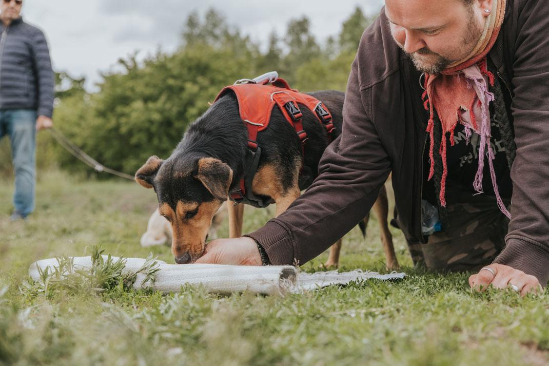 Suchspiel für Hund mit Teppich Erpetal Berlin Hoppegarten Gruppenbild Streunerhilfe Bulgarien e.V. Hundefotografie Berlin Tierfotograf Brandenburg authentische Reportage