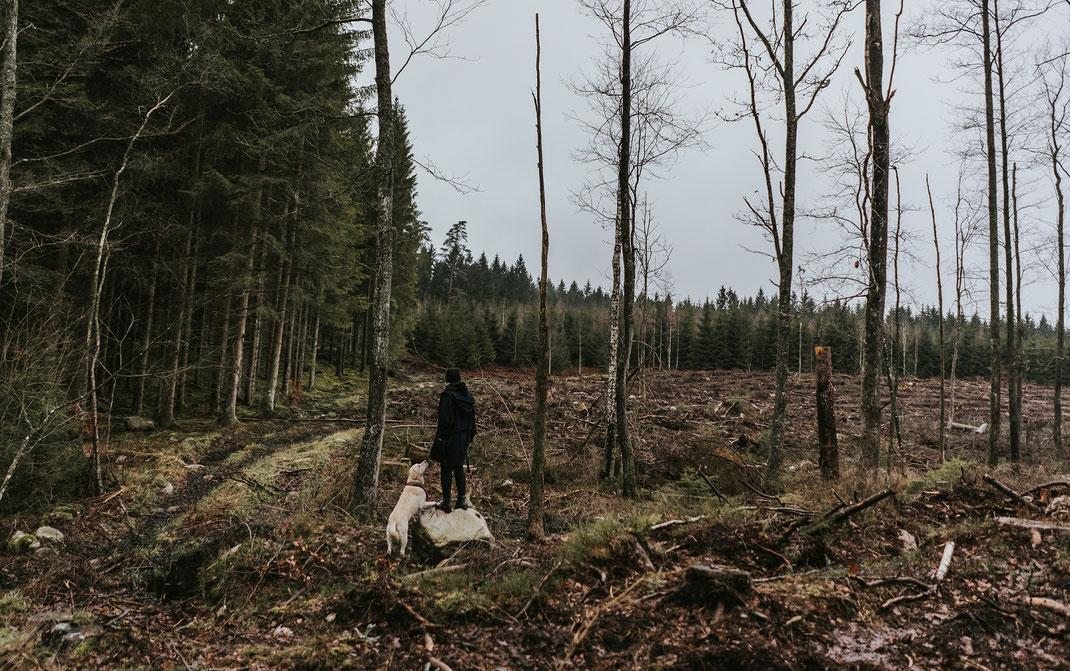 foto im wald mit hund skane suedschweden nadine kunath reise fotografie travelphotographer reisefotografin berlin