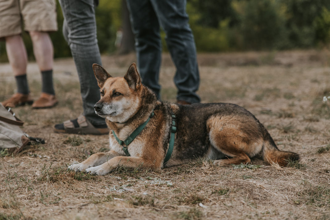 Streunertreffen im Erpetal des Tierschutzverein Streunerhilfe Bulgarien e.V. Hundefotografie Berlin Tierfotografie Fotografin Erfahrungsbericht Auslandstierschutz Hunde aus dem Ausland Bulgarien
