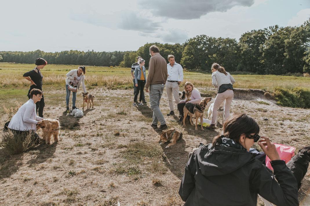 Streunertreffen im Erpetal des Tierschutzverein Streunerhilfe Bulgarien e.V. Hundefotografie Berlin Tierfotografie Fotografin