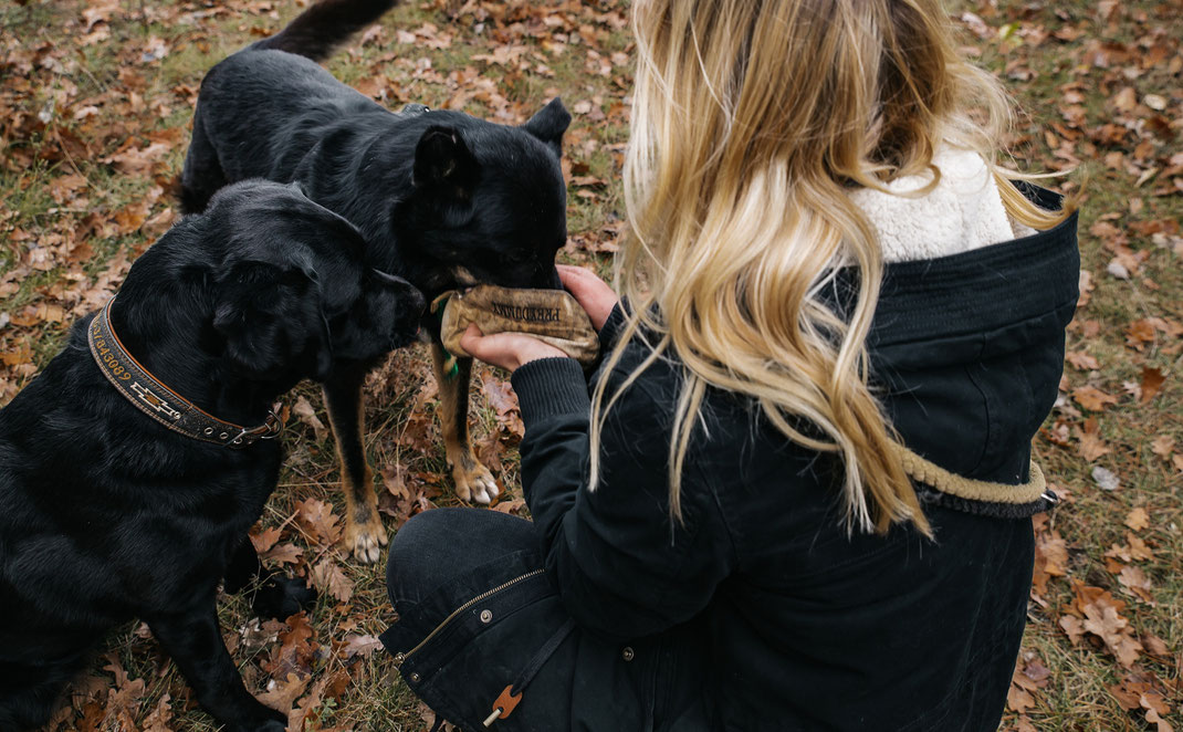 Dummietraining Landschaftspark Adlershof Bildstrecke mit Hundeschule Hundekompass Trainerin Anna Ostrowska Hundefotografie Berlin
