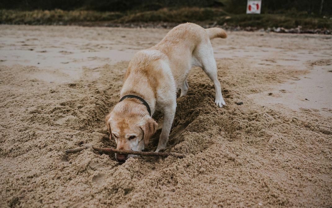 Stenshuvud National Park mit Hund skane suedschweden nadine kunath reise fotografie travelphotographer reisefotografin berlin