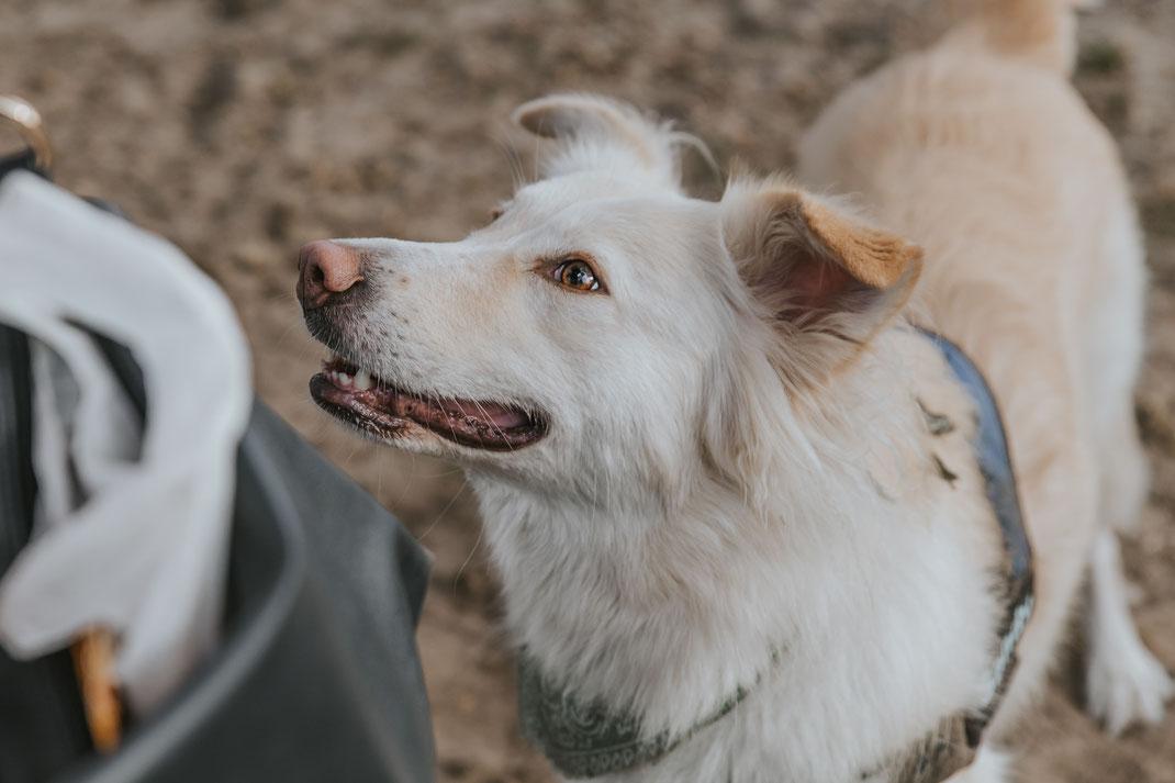 Portraitfoto Hund Streunertreffen im Erpetal des Tierschutzverein Streunerhilfe Bulgarien e.V. Hundefotografie Berlin Tierfotografie Fotografin Erfahrungsbericht Auslandstierschutz Hunde aus dem Ausland Bulgarien