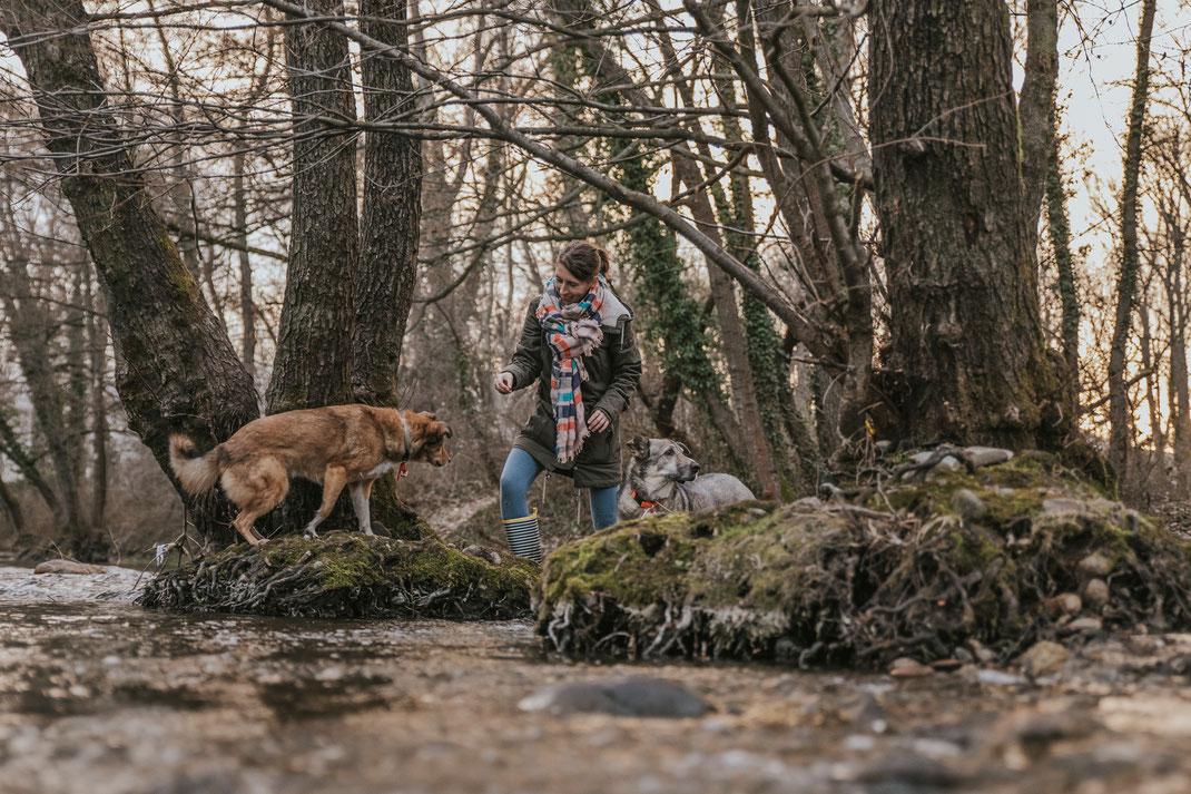 Hundefotografie Berlin Brandenburg natürliche Portraits mit Hund Mensch und Haustier Fotos