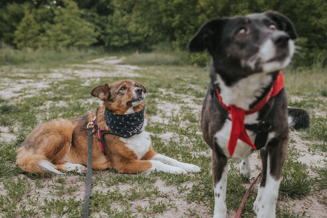 Tierschutzhund Hundeportraits draußen Erpetal Berlin Hoppegarten Gruppenbild Streunerhilfe Bulgarien e.V. Hundefotografie Berlin Tierfotograf Brandenburg authentische Reportage