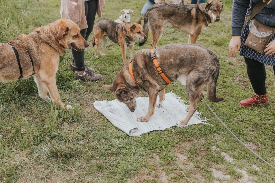 Suchspiele für Hund im Freien Erpetal Berlin Hoppegarten Gruppenbild Streunerhilfe Bulgarien e.V. Hundefotografie Berlin Tierfotograf Brandenburg authentische Reportage
