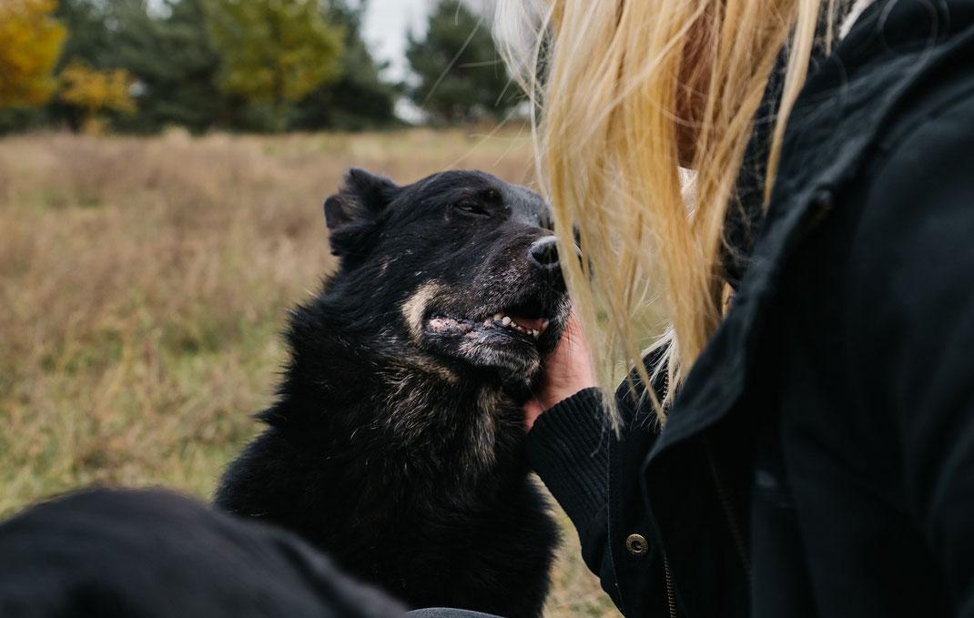 Bildstrecke Hündin beim schmusen mit Hundeschule Hundekompass Trainerin Anna Ostrowska Hundefotografie Berlin