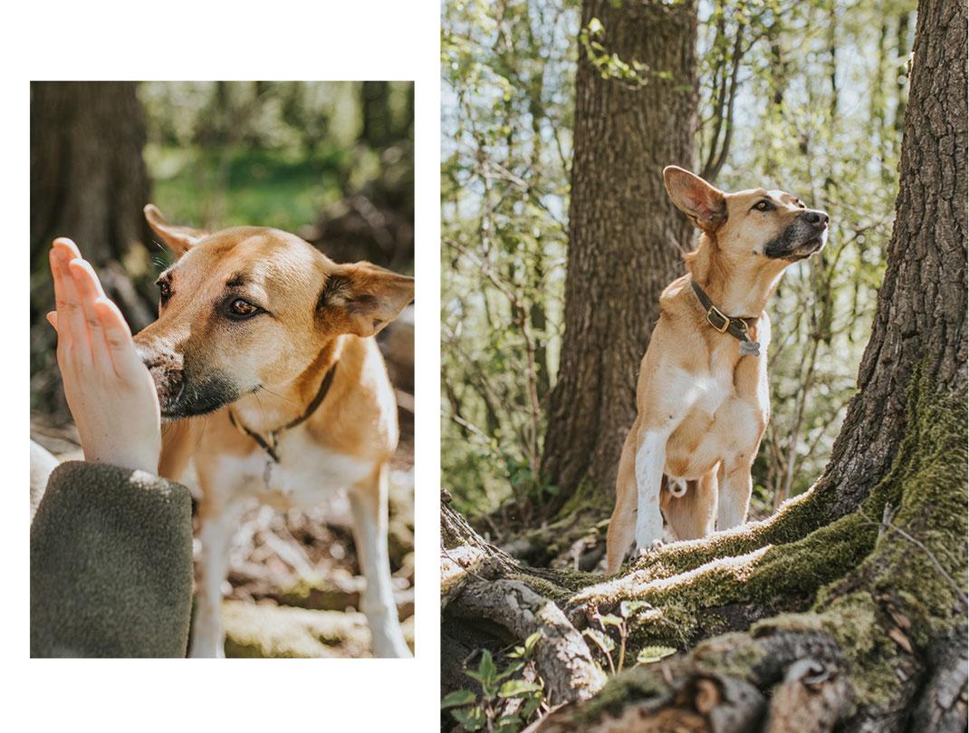 Hundefotografie Erpetal Berlin Brandenburg Frau ein Hunde natürliche Portraits mit Haustier Hundefotos Tierfotograf Nadine Kunath