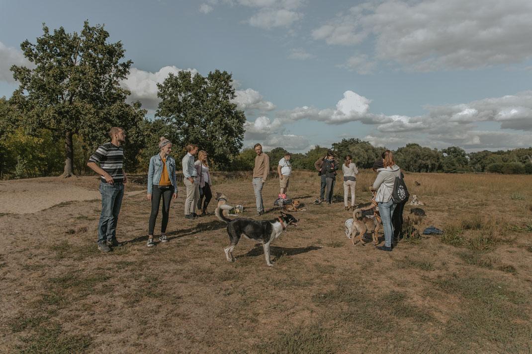 Straßenhunde Streunertreffen im Erpetal des Tierschutzverein Streunerhilfe Bulgarien e.V. Hundefotografie Berlin Tierfotografie Fotografin Erfahrungsbericht Auslandstierschutz Hunde aus dem Ausland Bulgarien