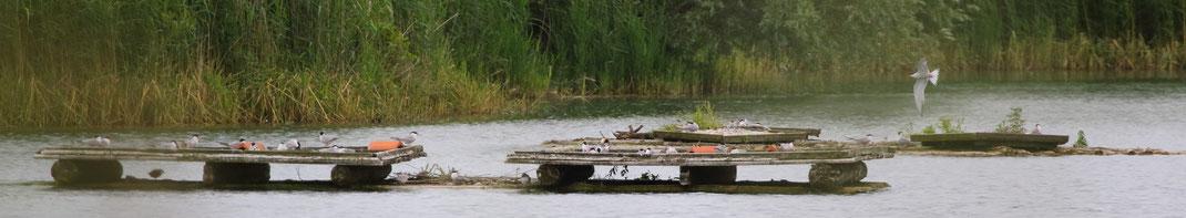 Mossandlweiher mit Flussseeschwalben-Brutflößen (Foto: Michael Herzig)