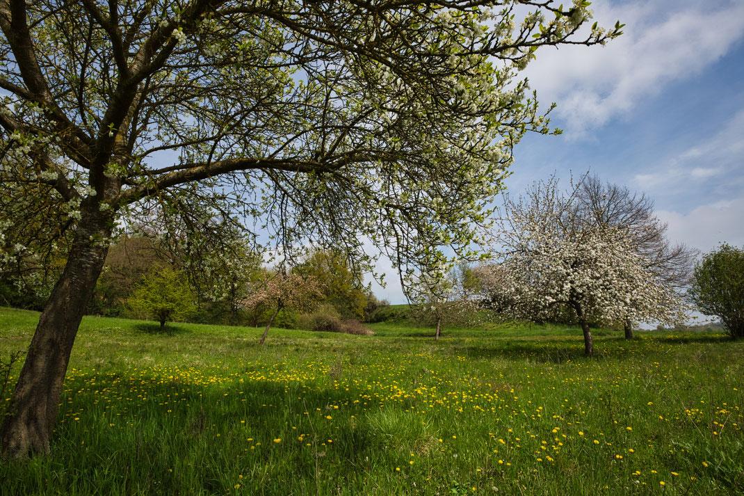 1. Mai 2021 auf einer Flurbereinigungsfläche im nördlichen Hügelland bei Töding (Foto: Joachim Aschenbrenner)
