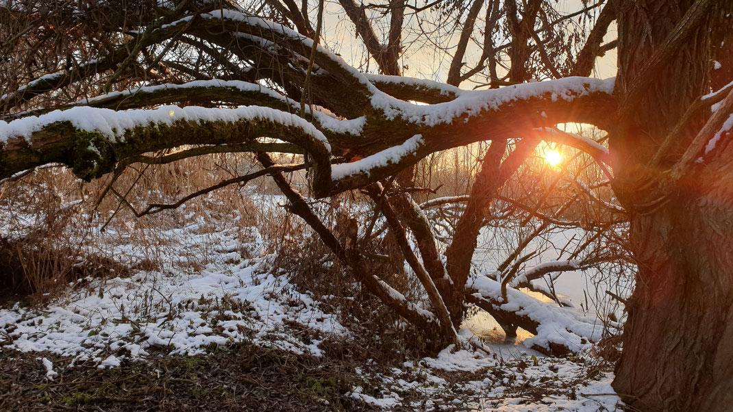 Januar an der Vils bei Reisbach (Foto: Dr. Siegfried Lechner)