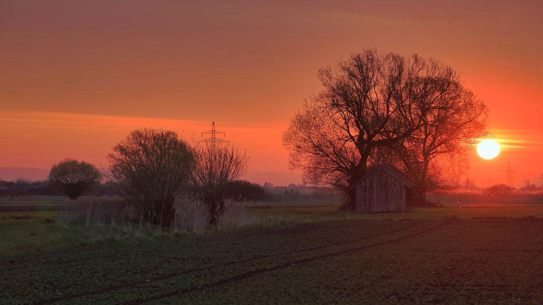Ein Aprilmorgen im Königsauer Moos bei Töding (Foto: Joachim Aschenbrenner 2021).