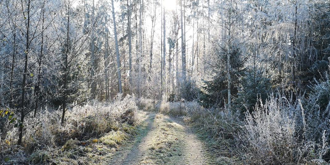 Waldweg bei Buchreith im äußersten Westen des Landkreises Dingolfing-Landau (Foto: Michael Herzig)