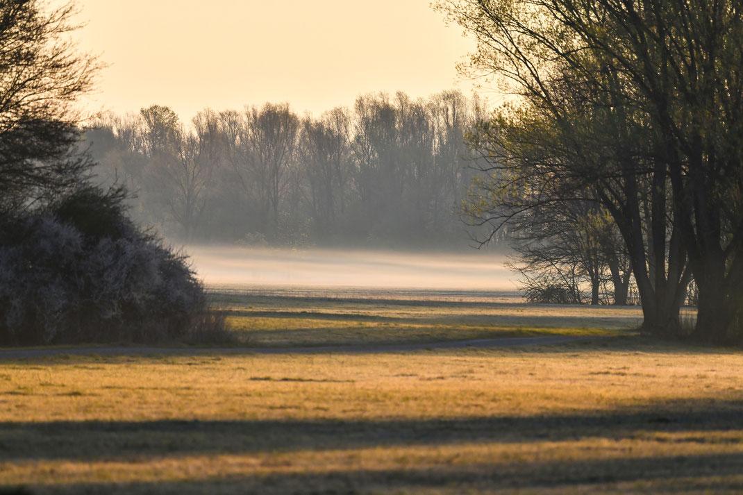 Ein Aprilmorgen im Naturschutzgebiet Vilswiesen (Foto: Dr. Siegfried Lechner)