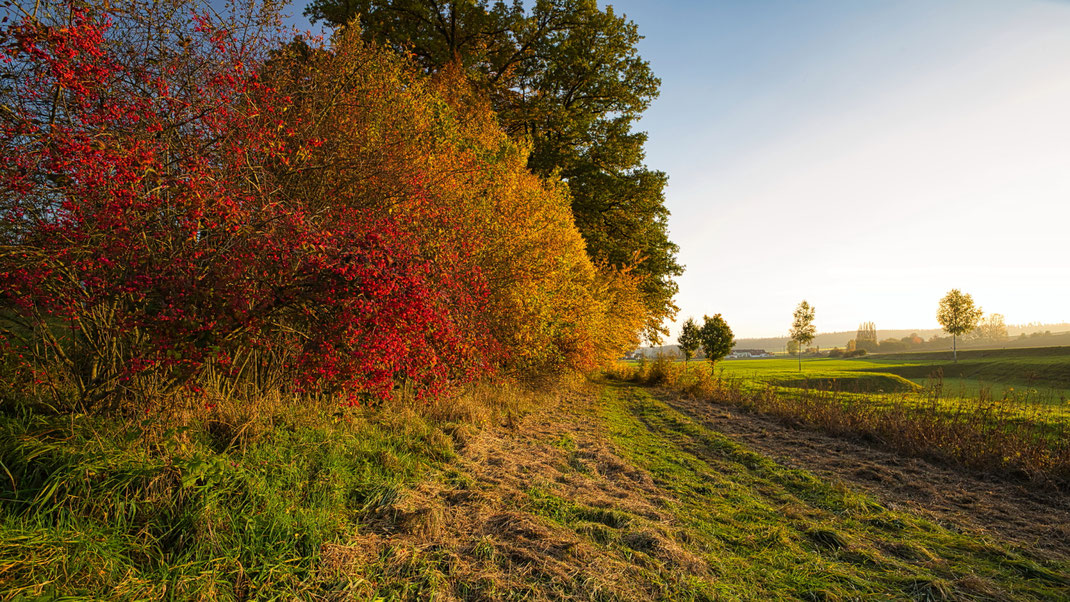 Im Herbst bei Frichlkofen (Foto: Joachim Aschenbrenner)