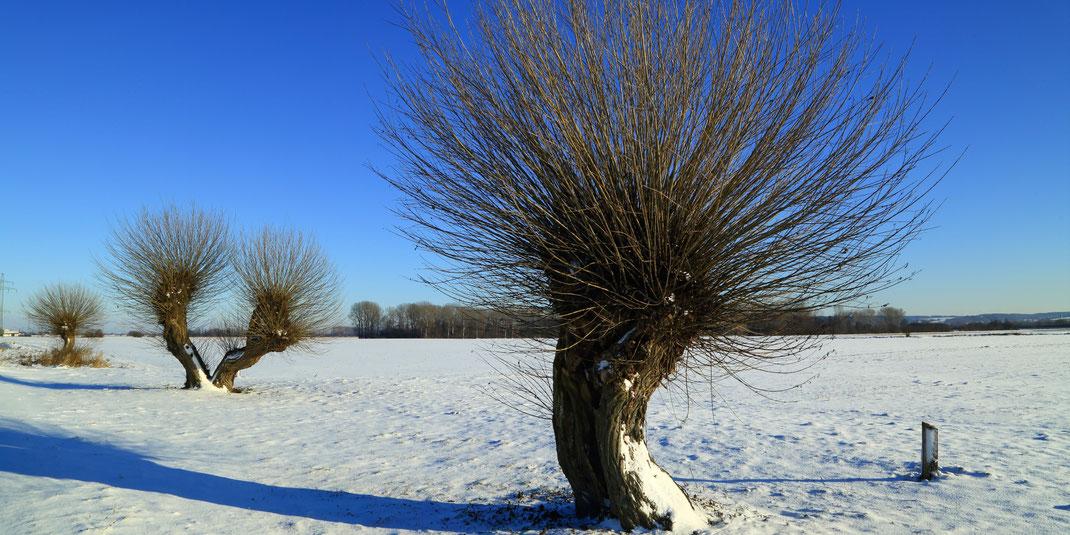 Januar im Königsauer Moos (Foto: Joachim Aschenbrenner)