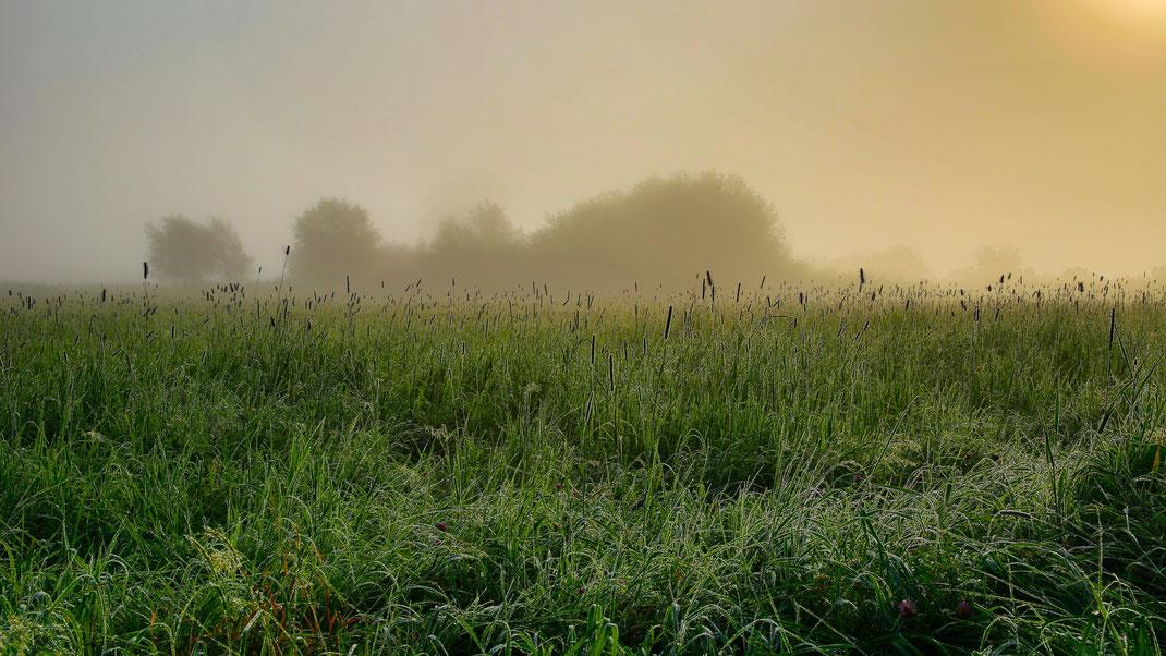 Kühler Morgen, Nebel, Nässe - der Herbst beginnt in den Mooswiesen (Foto: Joachim Aschenbrenner 2021)