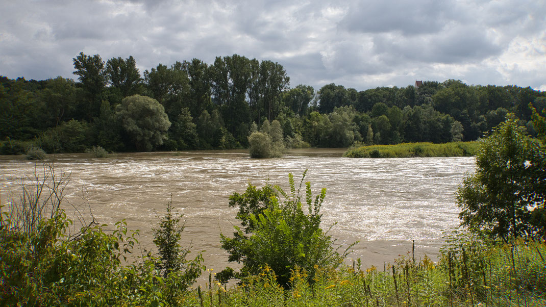 Ein nasser und kühler August verabschiedet sich mit viel Regen und Isarhochwasser bei Zeholfing (Foto: Joachim Aschenbrenner, 2021).