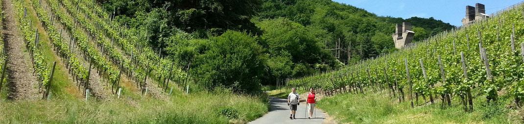 Der Abstieg vom Rotweinwanderweg nach Ahrweiler