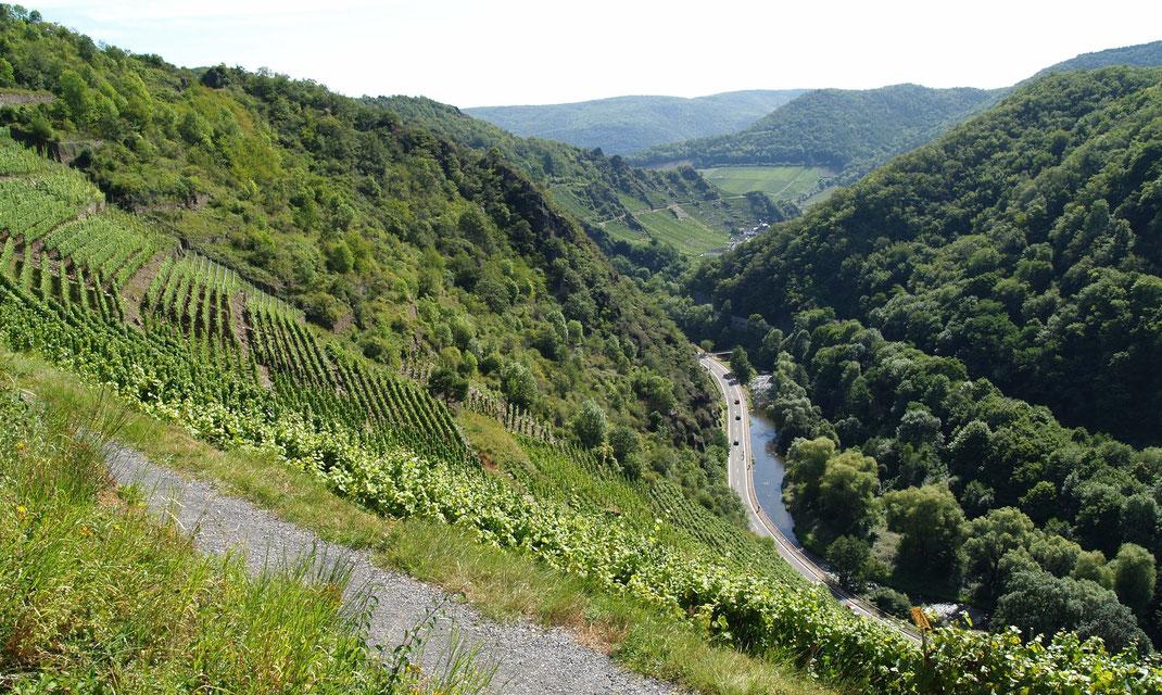 """Die Weinbergslage """"Altenahrer Eck"""" am Rotweinwanderweg mit Blick Richtung Mayschoß"""