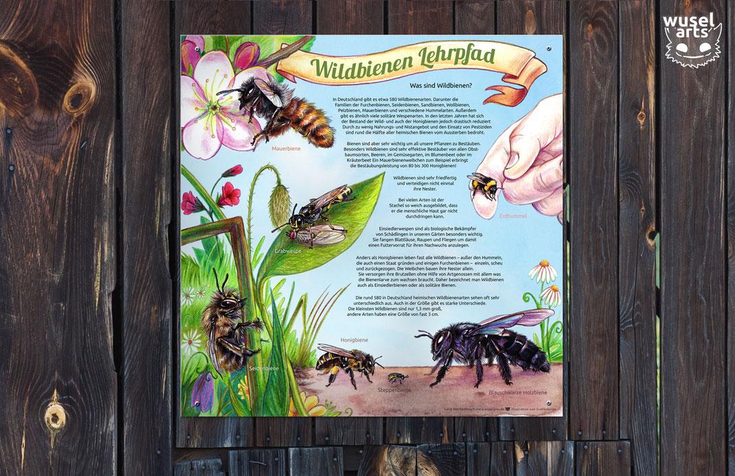 Wildbienen Lehrpfad Schild, Was sind Wildbienen? Seidenbiene, Mauerbiene, Erdhummel, Steppenbiene Infotafel