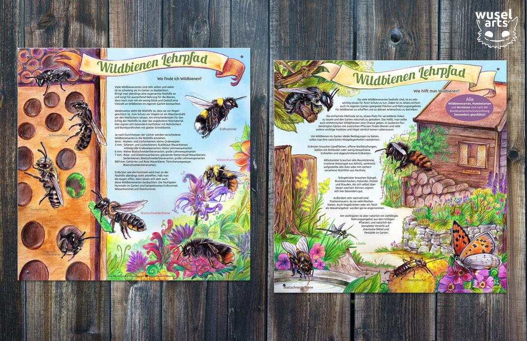 Wildbienen Lehrpfad, Wildbienen Infotafel, Bienen Aquarell Illustration, Kinder lernen, Biene, Wie hilft man Wildbienen?